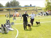 Собаки, щенки Баварская гончая, цена 250 бел. руб., Фото