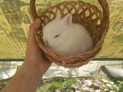 Грызуны Кролики, цена 120 бел. руб., Фото