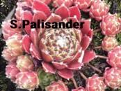 Домашние растения Садовые растения, цена 3 бел. руб., Фото
