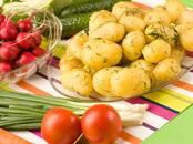 Продовольствие,  Овощи Картофель, цена 0.90 бел. руб./кг., Фото