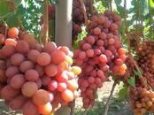 Сельское хозяйство Семена и рассада, цена 7 бел. руб., Фото